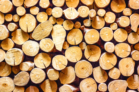 Pine timber wooden for building construction vintage using classical background or use it in design and decorative.