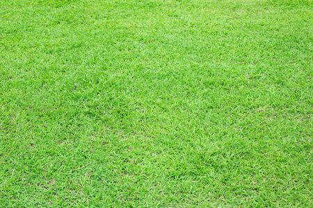 green grass floor texture Ideal for use in the design backgroung.