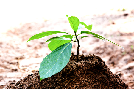Growing young trees in the hands of farmers. And with the growing business. The concept of reforestation to reduce global warming.