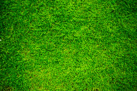 Green grass texture background vignette or the naturally walls texture Ideal for use in the design Enter text in the middle .