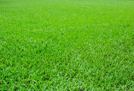 Green grass floor background or the naturally walls texture Ideal for use in the design fairly. Stock Photo