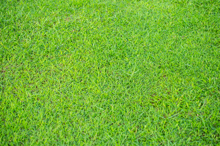 green grass floor texture background . Ideal for use in the design backgroung.