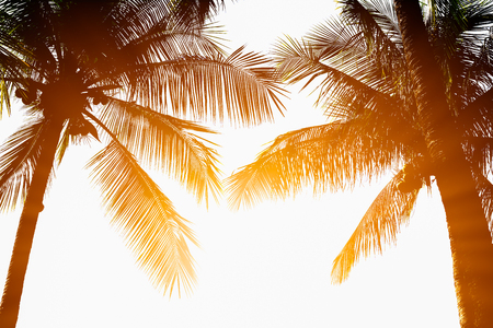 Green coconut tree separated on sky background clearly in gardent. In order to design about morning after sunrise.See the beautiful trees arranged in order.mer