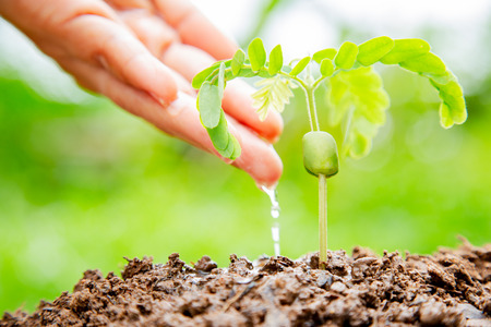 Hands of young man watering seedlings growing on top of the green leaf blurred background. Business Growth Concepts