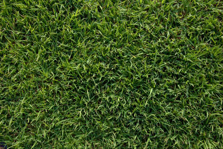 Green wall and green background of artificial grass designed for outdoor sports and business related to sports. Zdjęcie Seryjne