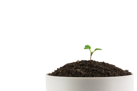 cherish: Sapling of a tree on a white background.