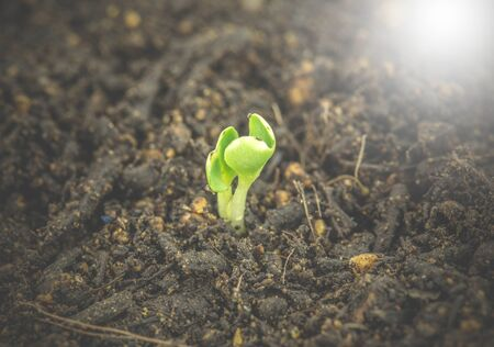 increase fruit: Tree plant grown, soil background Stock Photo