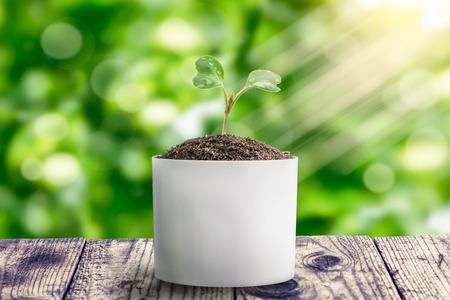 Flowering cabbage seedlings stay on green background bokeh.