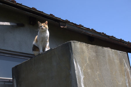 glower: Cat that climbed to the top