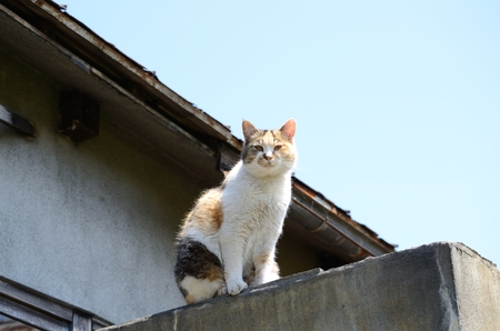 Cat that climbed to the top