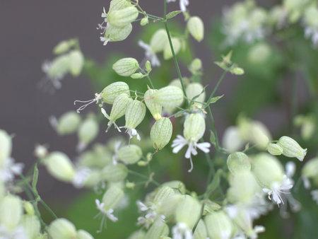 dainty: Dainty flowers
