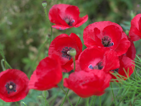 lurid: Red flowers Stock Photo