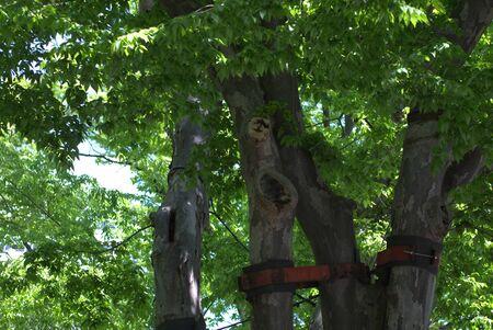 保護された木 写真素材