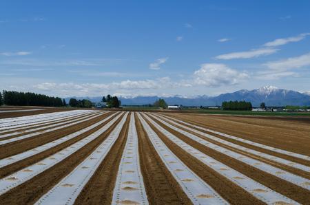 A vast vineyard