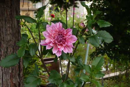 big flower: Big flower