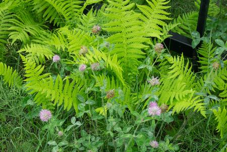 bud weed: Wild landscape Stock Photo