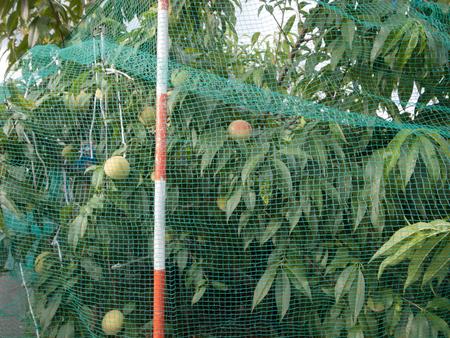 Fruit growing
