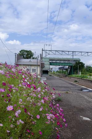 コスモスと鉄道駅 写真素材