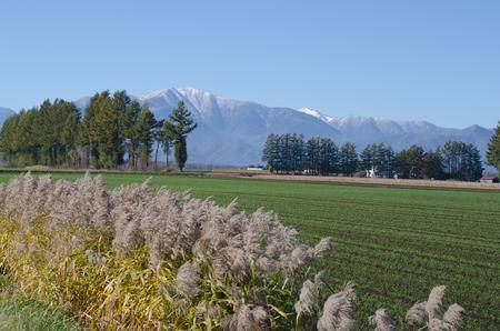 Vineyard landscape Stock Photo