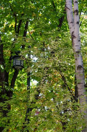 木や街灯 写真素材 - 80540936