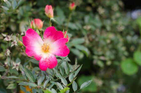 Flowers scenery Reklamní fotografie