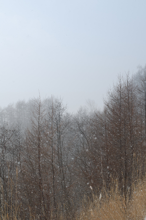 Winter 版權商用圖片