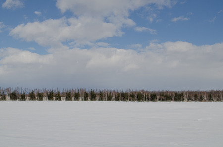 Snowy Plains