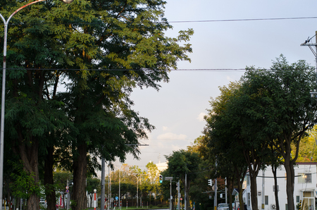 The road in the morning