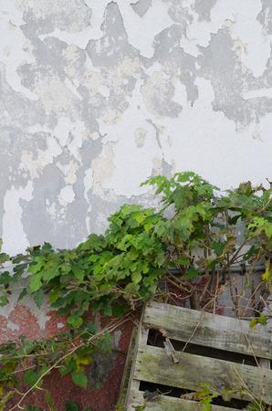 Skinned wall