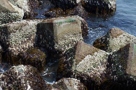 Tetrapod landscape 写真素材