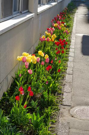 Flower landscape 写真素材