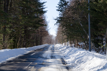 The Woods Road