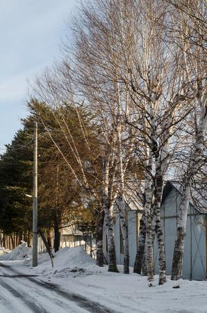 White Birch road