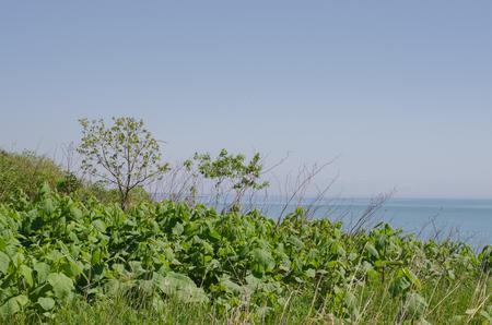 The beach in Taiki town Banco de Imagens