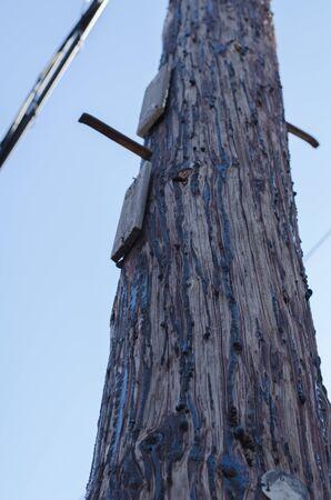 Old telephone poles