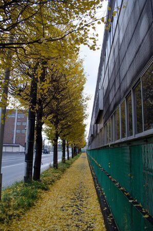 Autumn tree-lined Avenue