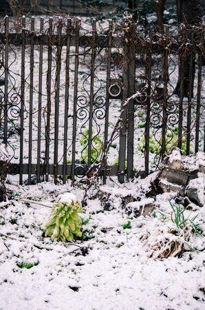 Frozen Doors