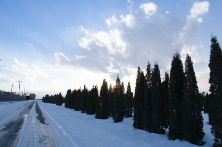 Trees lined up