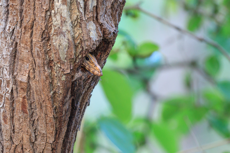 sneaky: Monitor Lizard in the birds hole (nest)