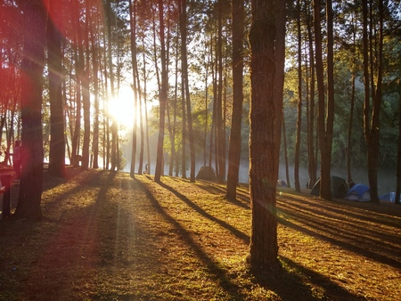forrest: sun in the forrest