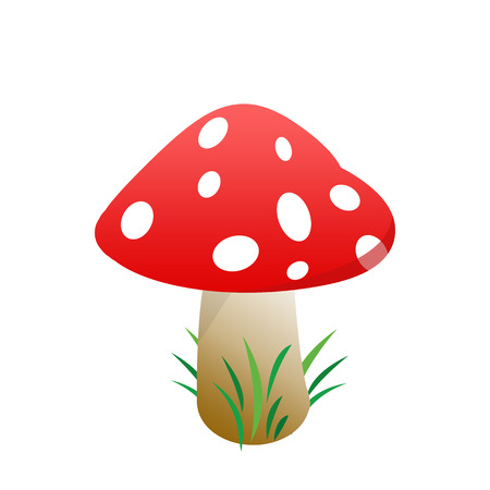 Mushroom on white background, vector illustration