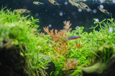 neon fish: water tree and beautiful fish Stock Photo