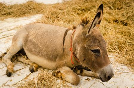 donkeys: donkeys