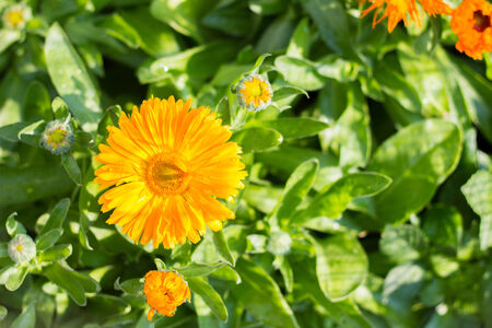 to bloom: the yellow flower bloom fight to daylight