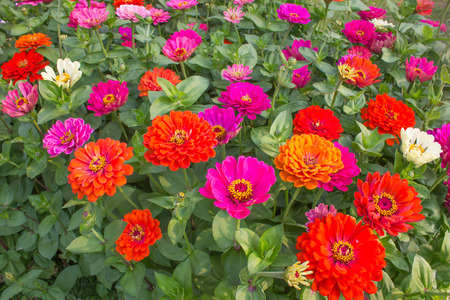 Gerbera flower colorfu fresh air in the morning photo