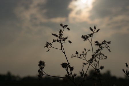 wayside: A grass flowers wayside in twilight time Stock Photo