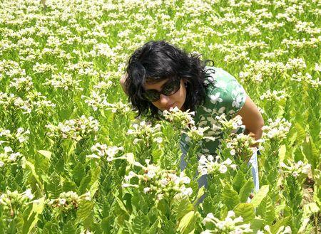 tobacco plants: Girl among field of tobacco plants
