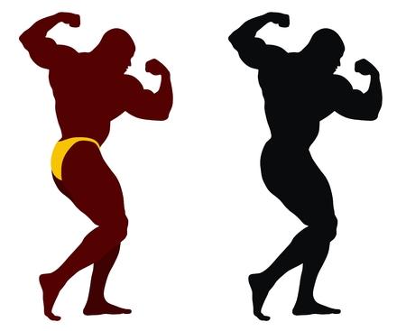 trizeps: Zusammenfassung Vektor-Illustration der Bodybuilder