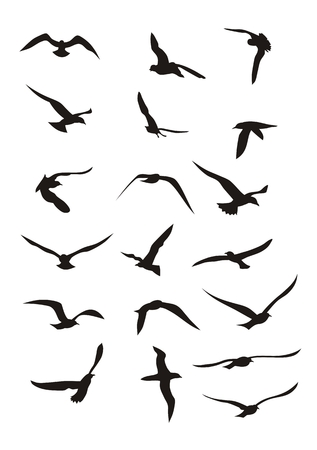 bird flying: Abstract vector illustration of flying birds
