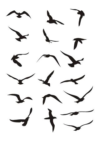 pajaros volando: Resumen ilustraci�n vectorial de vuelo de las aves